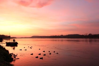 Canards au coucher du soleil sur la rivière Vistule (Kazimierz Dolny, Pologne) ©Bertrand Lemeunier