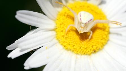 Macro photo d'une araignée en France ©Bertrand Lemeunier
