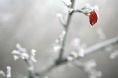 """""""Vivre au Canada, c'est vivre dans quatre pays différents... un pays par saison."""" Michel Conte L'hiver arrive, la dernière feuille... (Saskatchewan, Canada) ©Bertrand Lemeunier"""