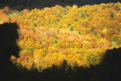 Paysage de France, derniers rayons du soleil sur une forêt en automne (Pyrénées, France) ©Bertrand Lemeunier
