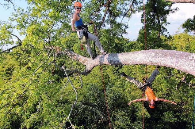 Vanessa et Bertrand lors de l'escalade d'un arbre de 200 ans en Amazonie (Brésil) ©Bertrand Lemeunier