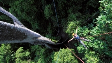 Escalade d'un arbre de 200 ans en Amazonie (Brésil) ©Bertrand Lemeunier