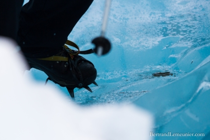 NZ_Westland_Fox-Glacier_ TERRA-TRIBUTA-7