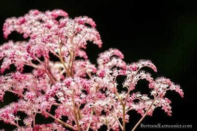 Fleurs au jardin botanique de Dunedin (Otago, Nouvelle-Zélande)